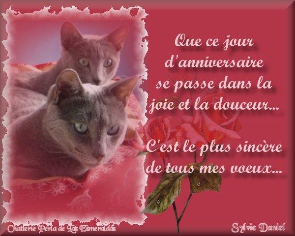 Anniversaire - rose et chats
