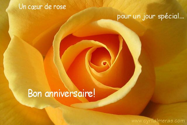 Anniversaire Rose Jaune